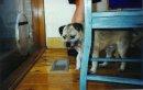 Wally dog